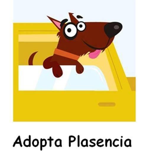 adopta-plasencia