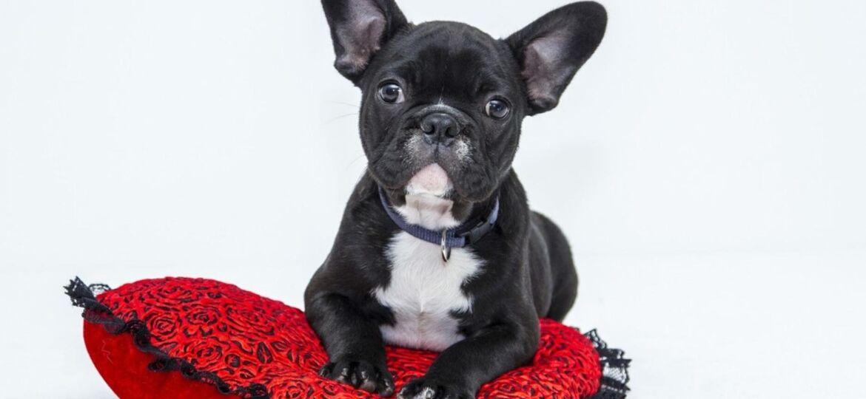 ¿Cuánto cuesta mantener un perro al año?