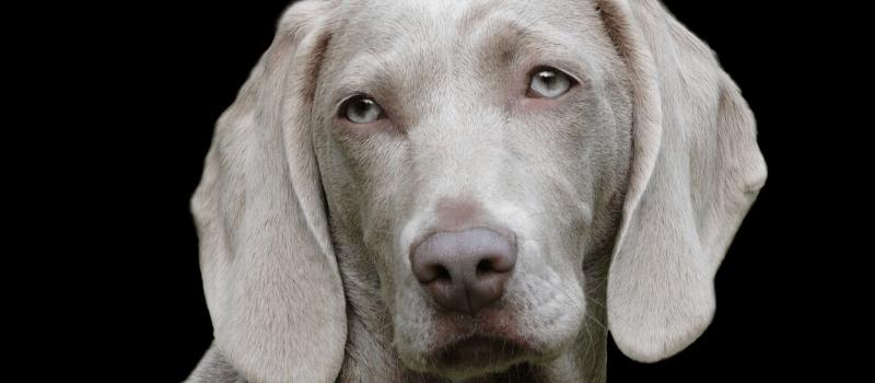 Cada cuánto tiempo debo llevar a mi perro al veterinario