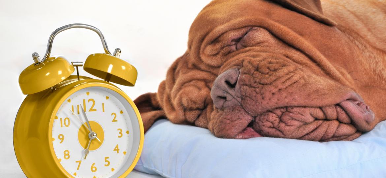 5 criterios para escoger la cama de un perro grande