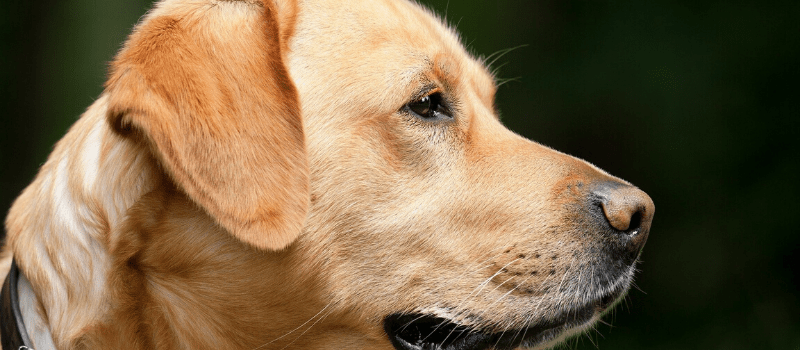 ¿Qué coberturas incluye un seguro canino?