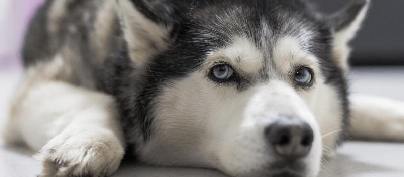 Consejos para cepillar mejor a tu perro
