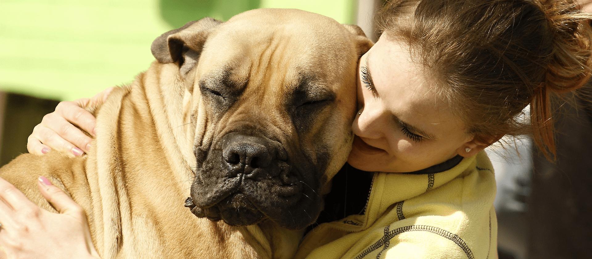 Los cinco cuidados básicos que necesitan los perros grandes de raza