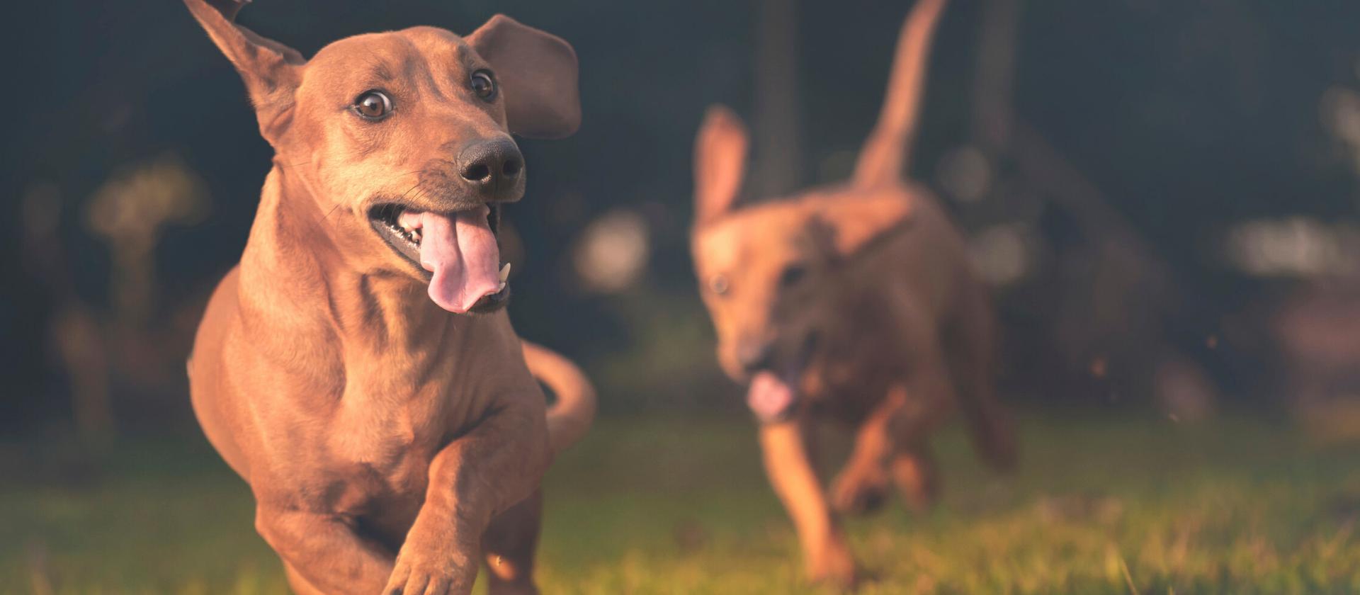 Costes medios de las principales dolencias en los perros