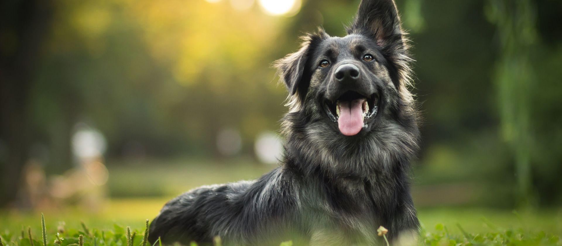 Las 3 enfermedades más frecuentes en los perros