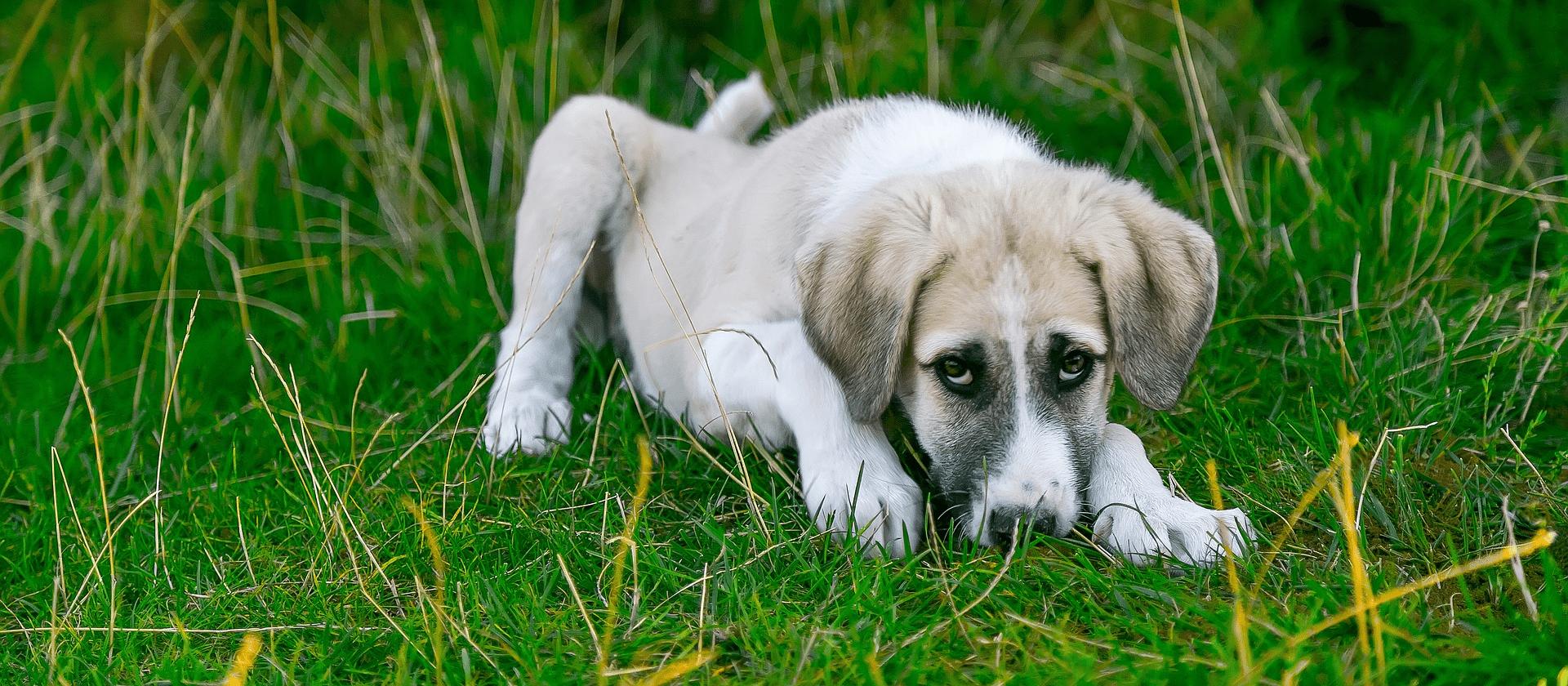 ¿Qué enfermedades puede transmitir un mosquito a tu perro?