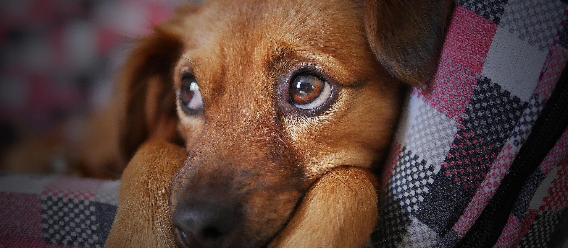 Enfermedades de la piel, también en perros