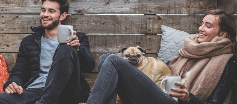 Descubre la mejor opción para viajar seguro con tu mascota