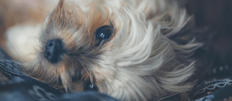 Encuentra el mejor precio en el seguro de tu perro