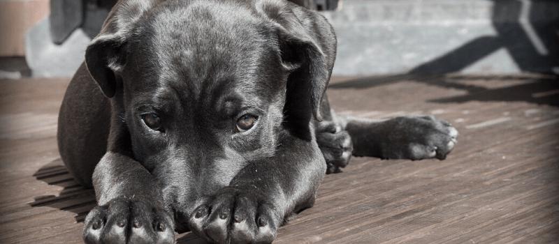 ¿Está mi perro enfermo? Descubre los principales síntomas