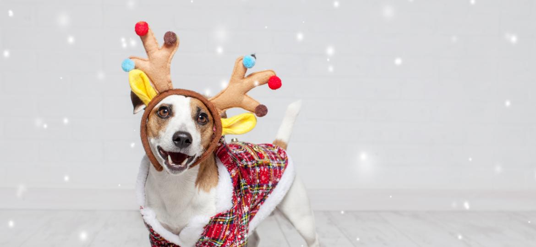Ayuda a tu perro a superar el miedo a los petardos de Navidad