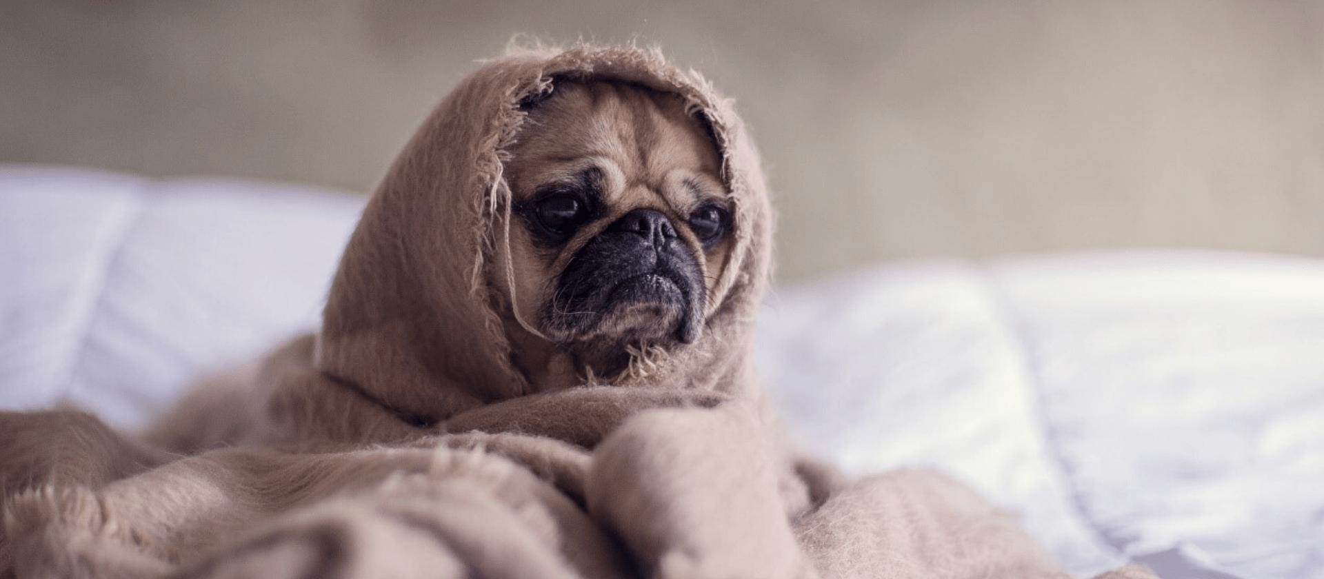 Los perros también se resfrían, aprende a prevenirlo