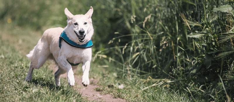 ¿Qué convierte a Petplan en el mejor seguro para tu perro?