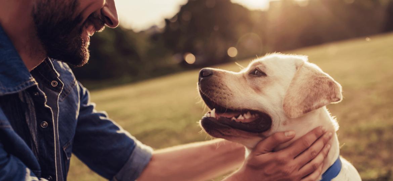 seguro-mascotas-preguntas