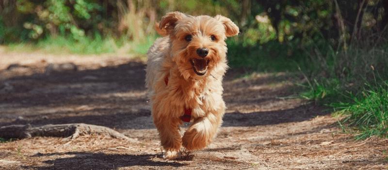 ¿Por qué Petplan es el mejor seguro veterinario para tu perro?