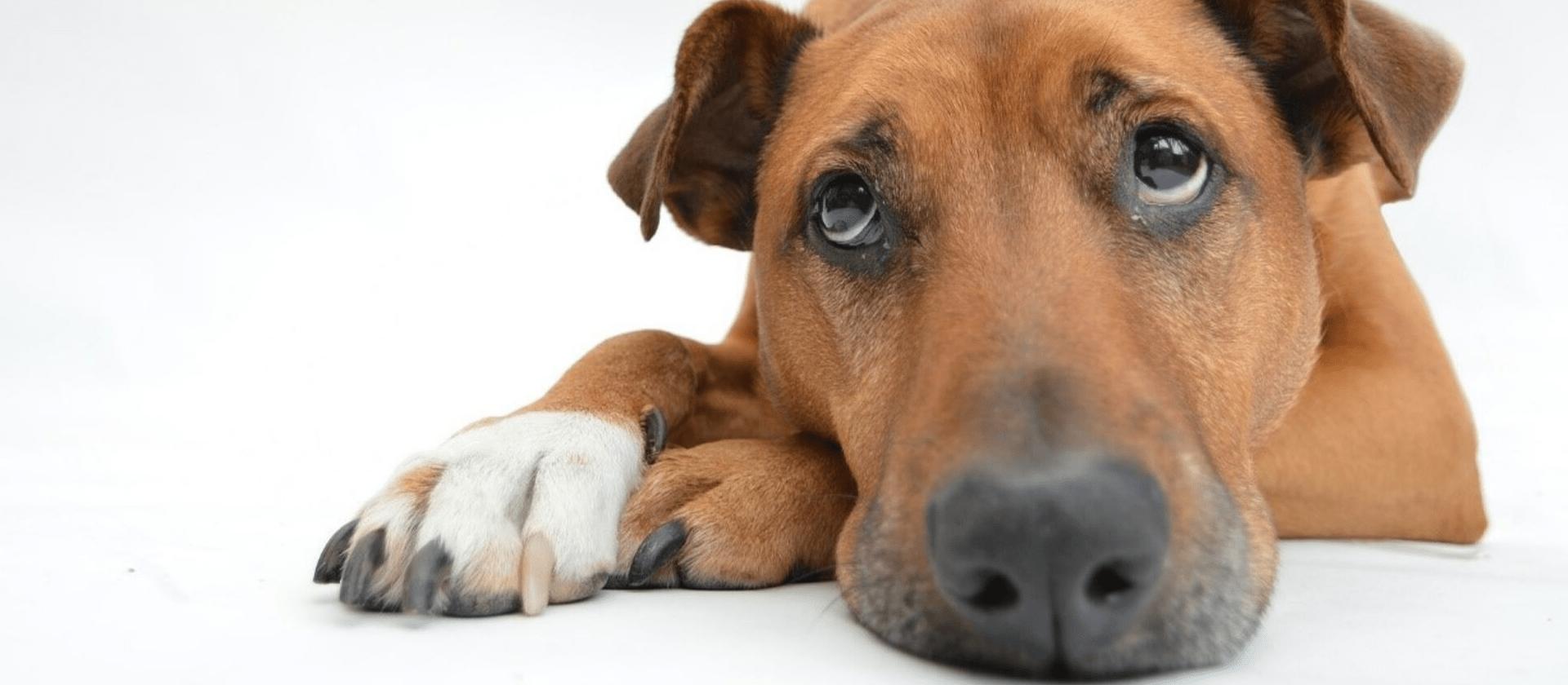 Razones por las que necesitas un seguro de mascotas